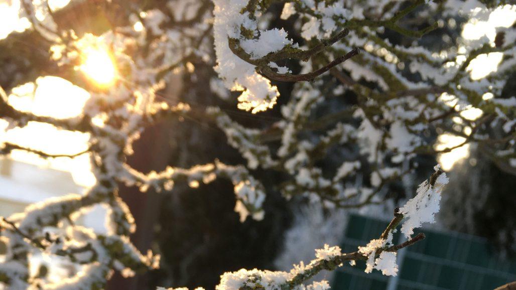 Vinterprakt i trädgården