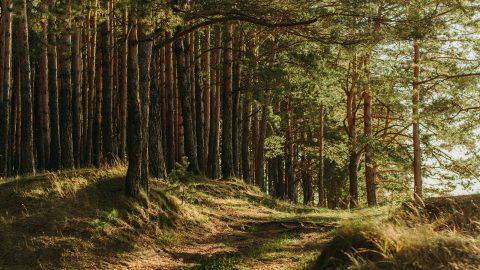 Skogsbad är bra för hälsan