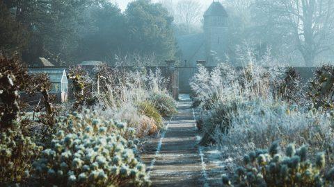Frostig trädgård i december