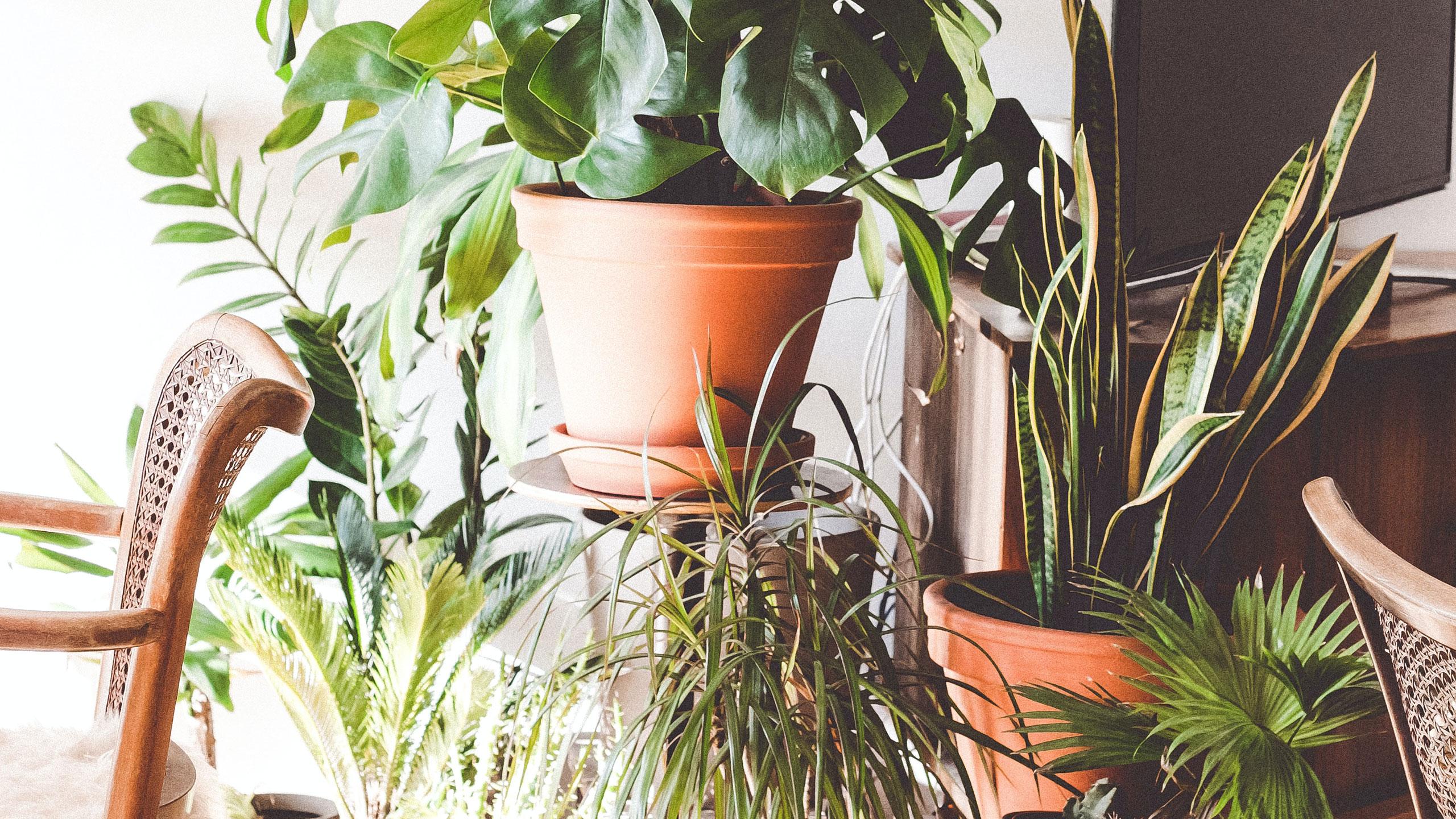 Lättskötta krukväxter