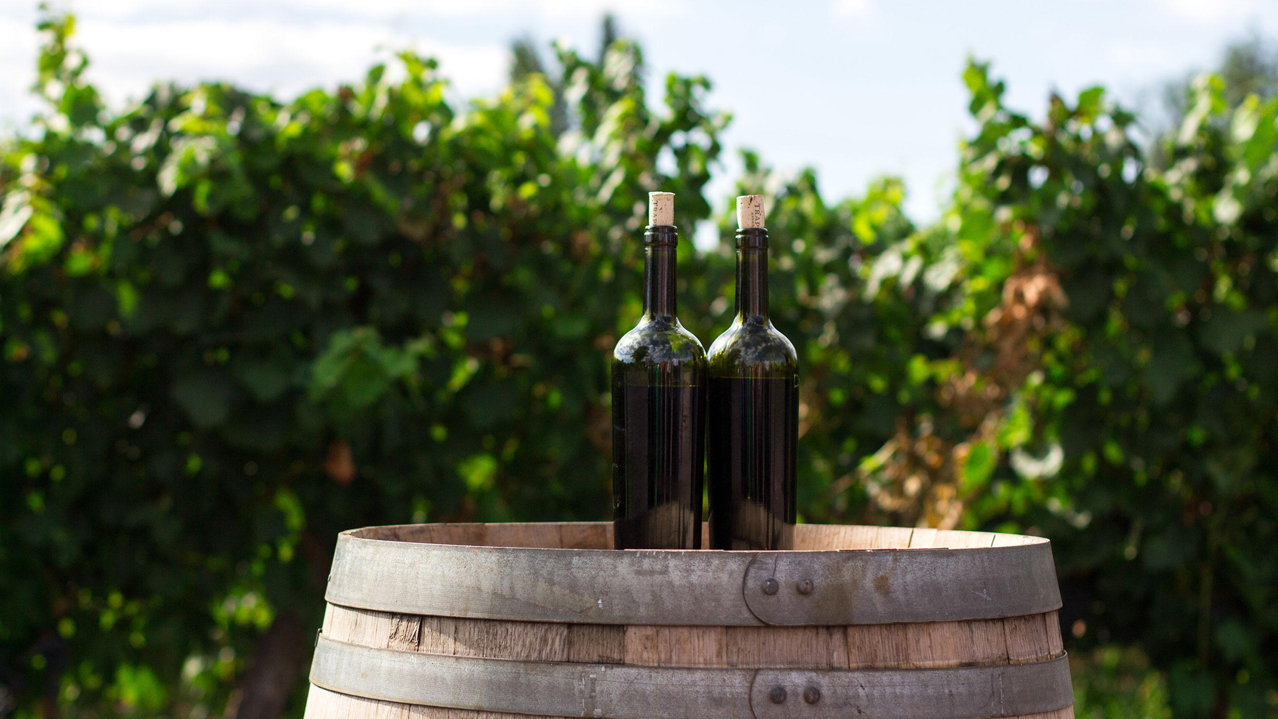 Vinflaskor på vinodling