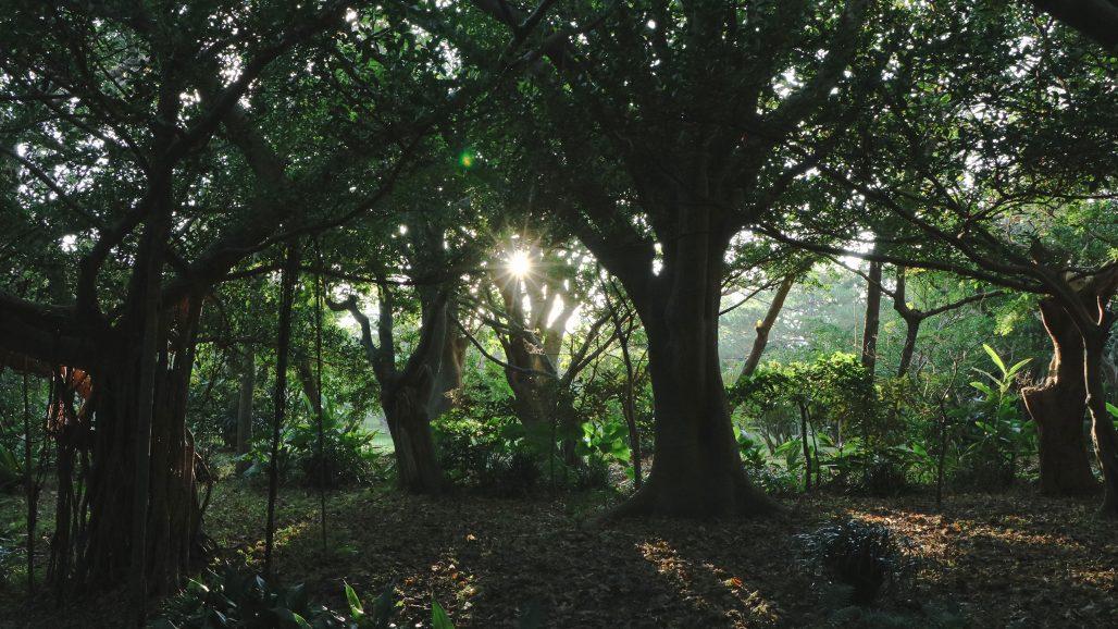 Woodland i trädgården