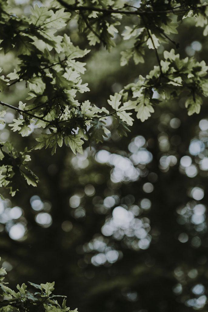 Stort ekträd i trädgården