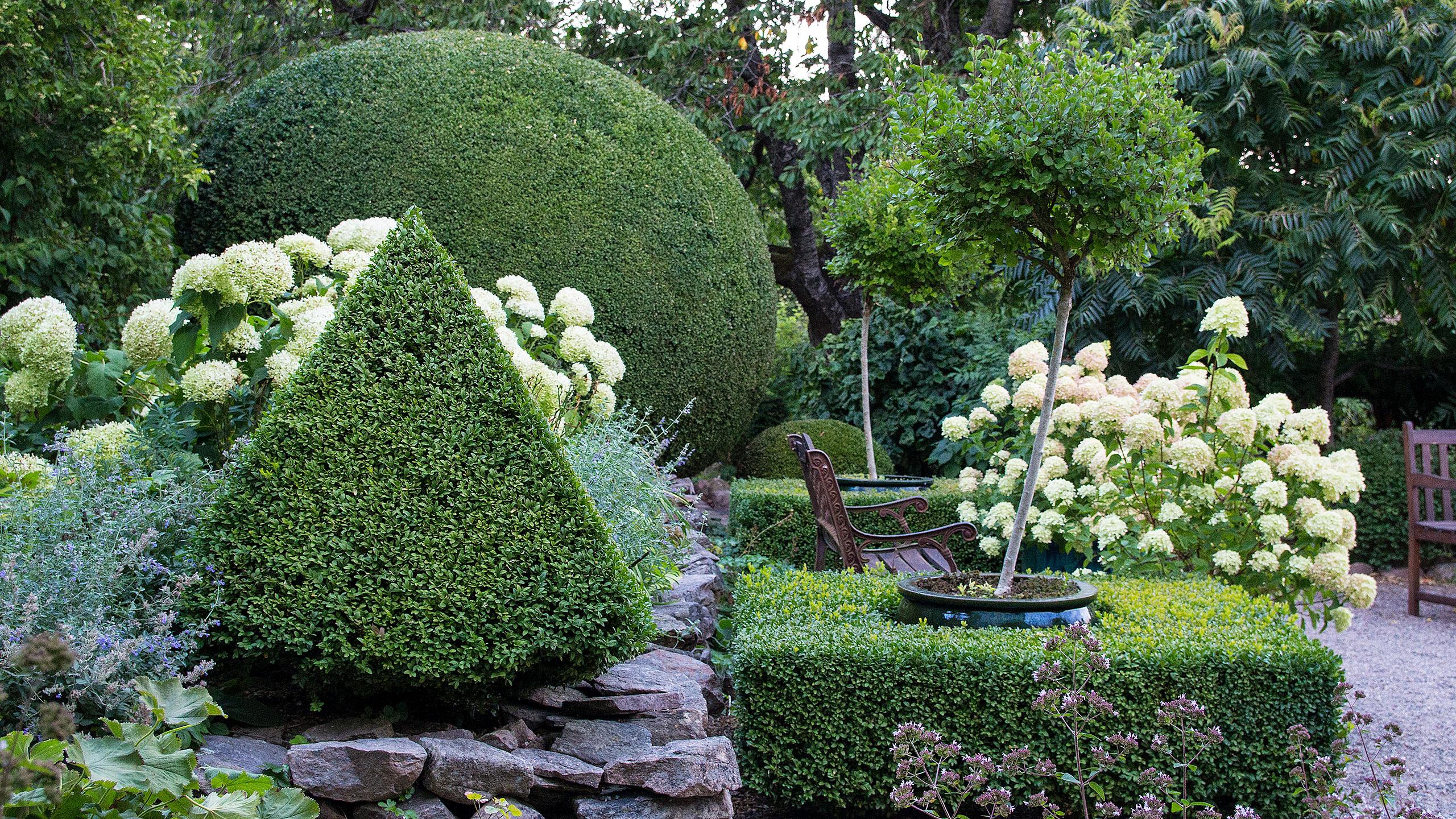 En trädgård med utsikt