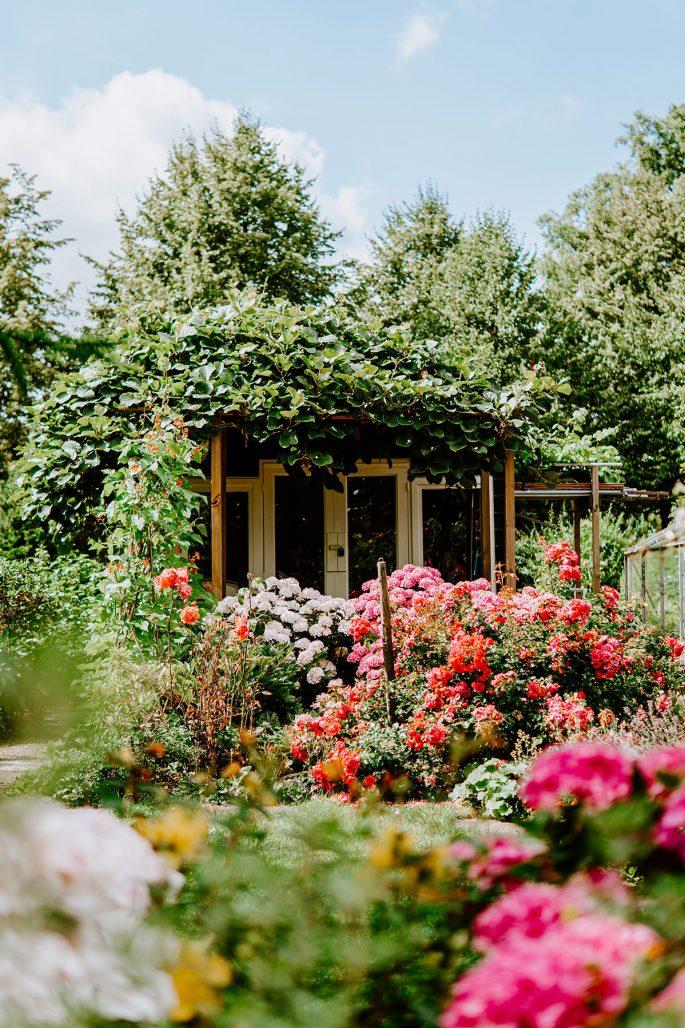 Många växter samlade i en liten trädgård