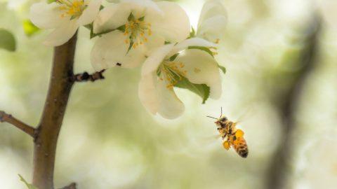 Så får du bina att trivas