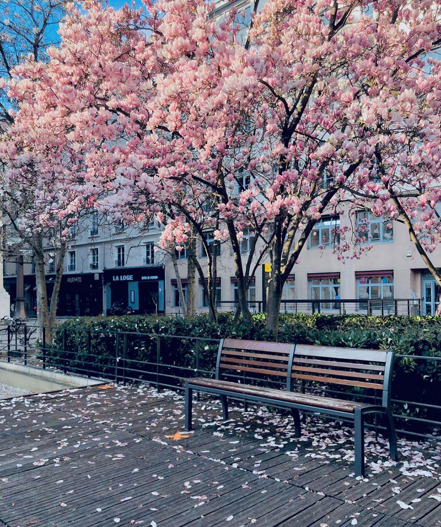 Bänk i utomhusmiljö med blommande träd