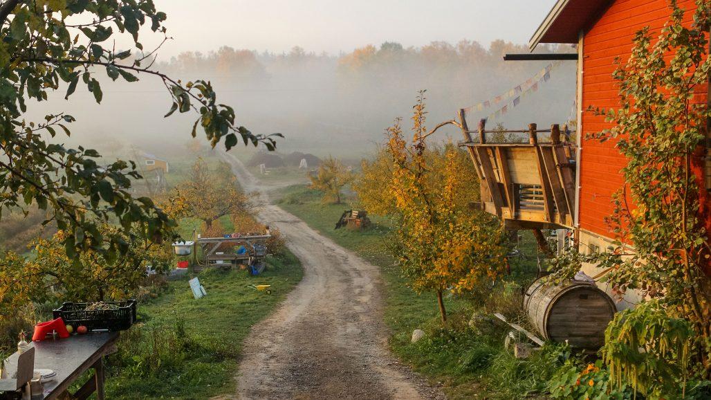 Besök Rosenhills trädgård i sommar, foto Angelica Söderberg