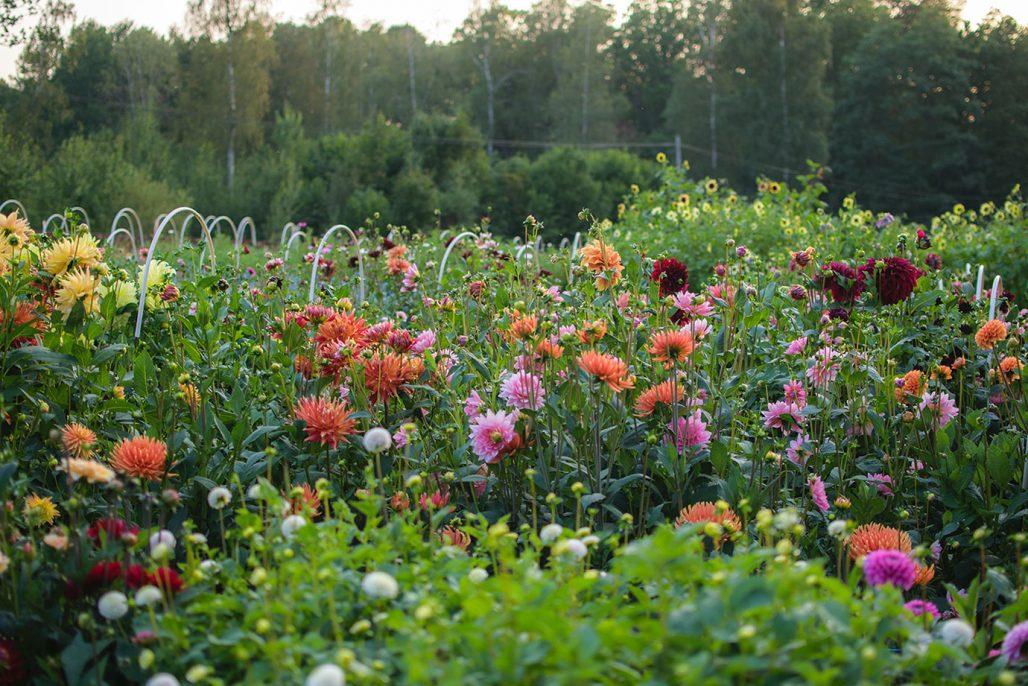 Blommor på Fiddekulla gård
