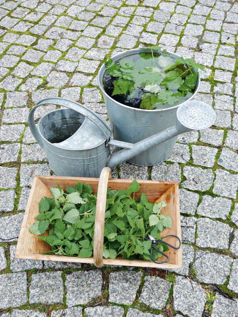 Gör nässelvatten att gödsla grönsaksodlingen med