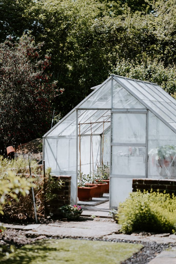 Tomatplantor utflyttade i växthuset