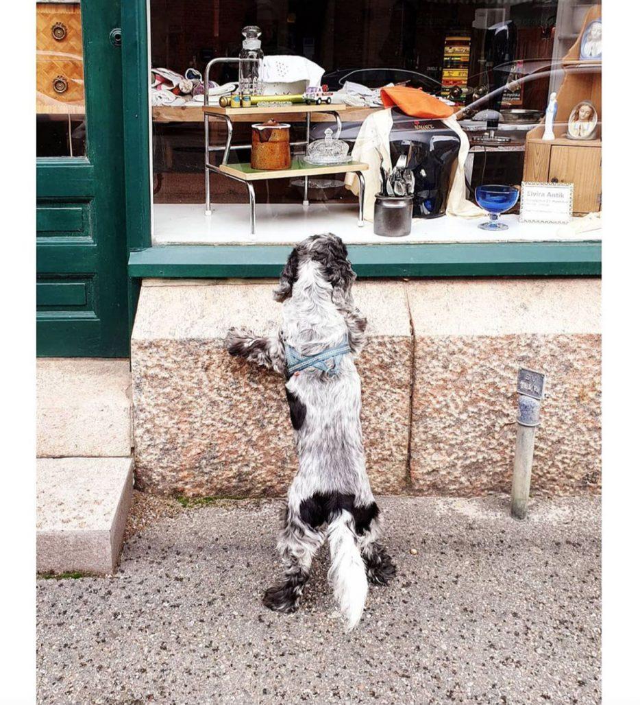 Hund på loppis hos ellellinor