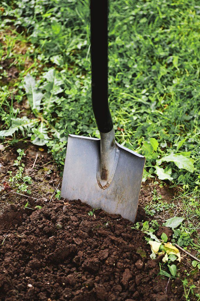 Gräv breda gropar när du planterar träd