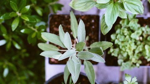Nya plantor till trädgården på plantskola