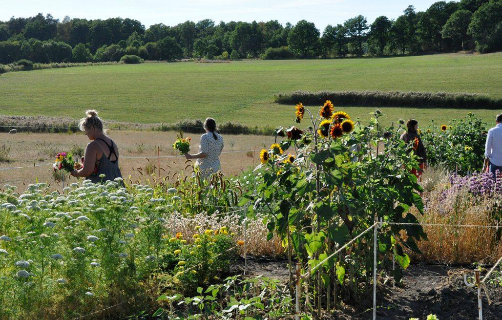 Blomsterfarmen i Halland