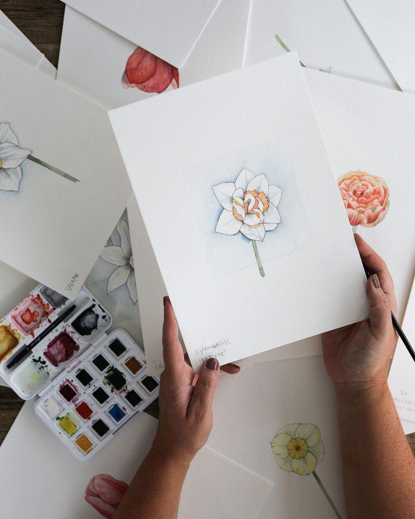 Lökväxter illustrerade av Hanna Wendelbo för Larsviken