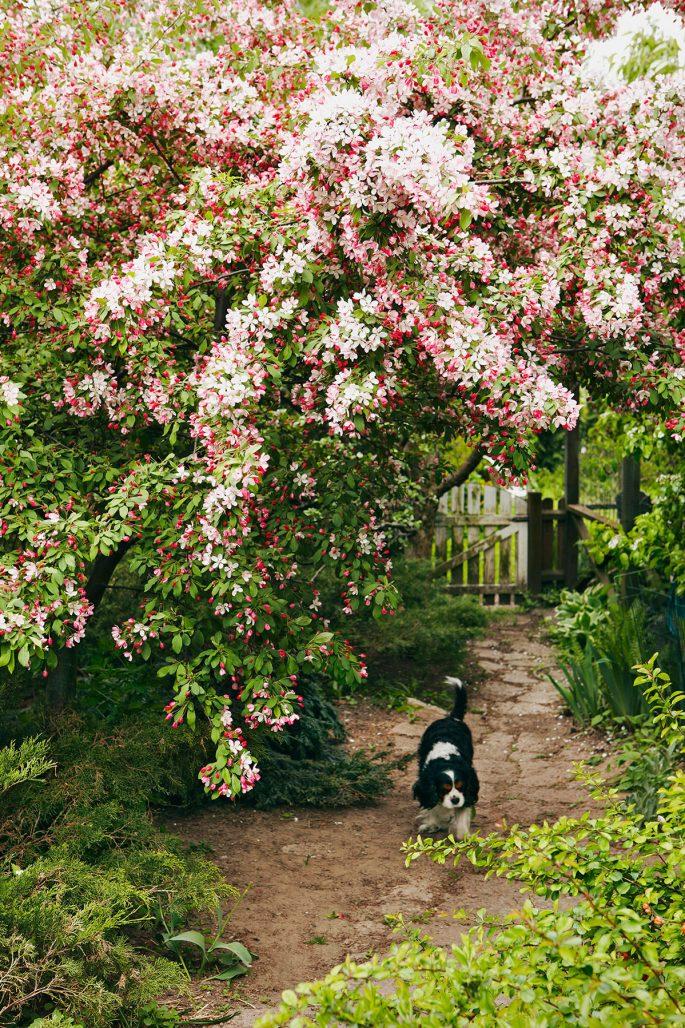En trädgård med paradisäppelträd och en hund