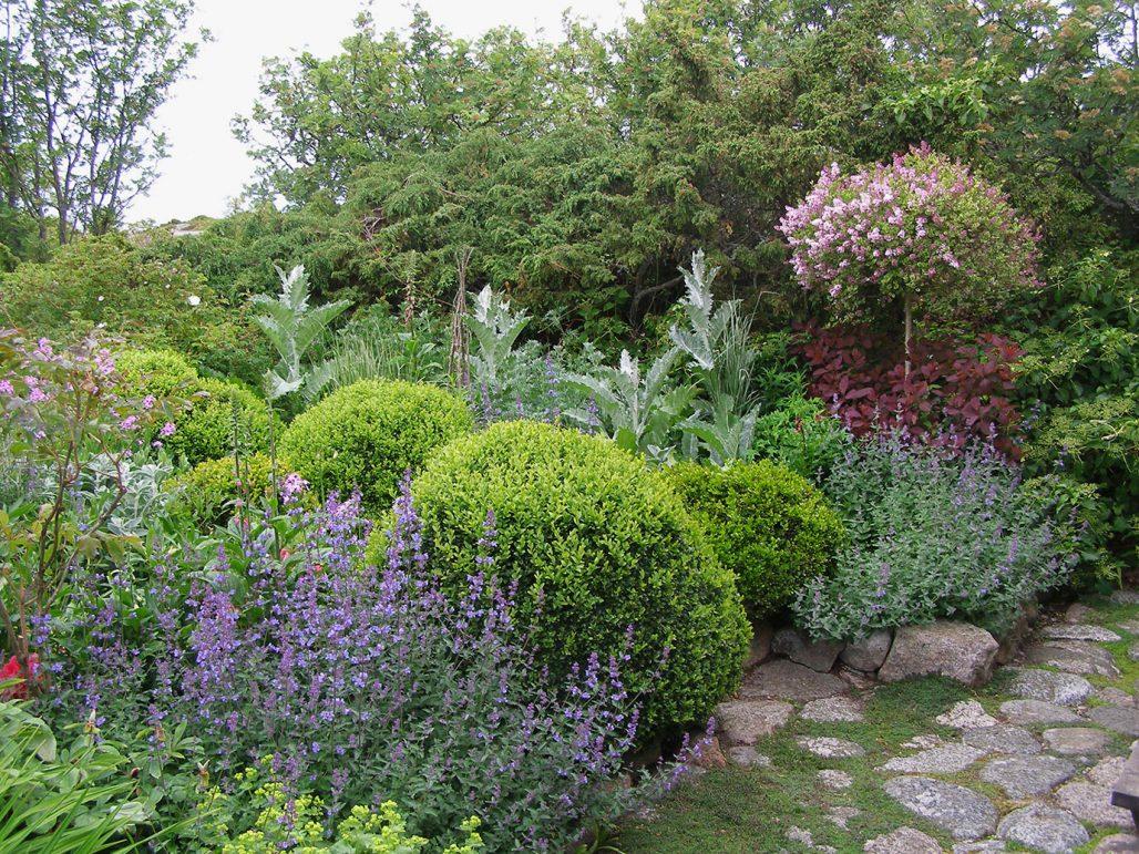 En trädgård med dvärgsyren