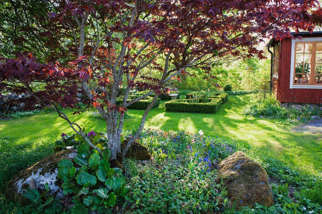 En trädgård med japansk lönn