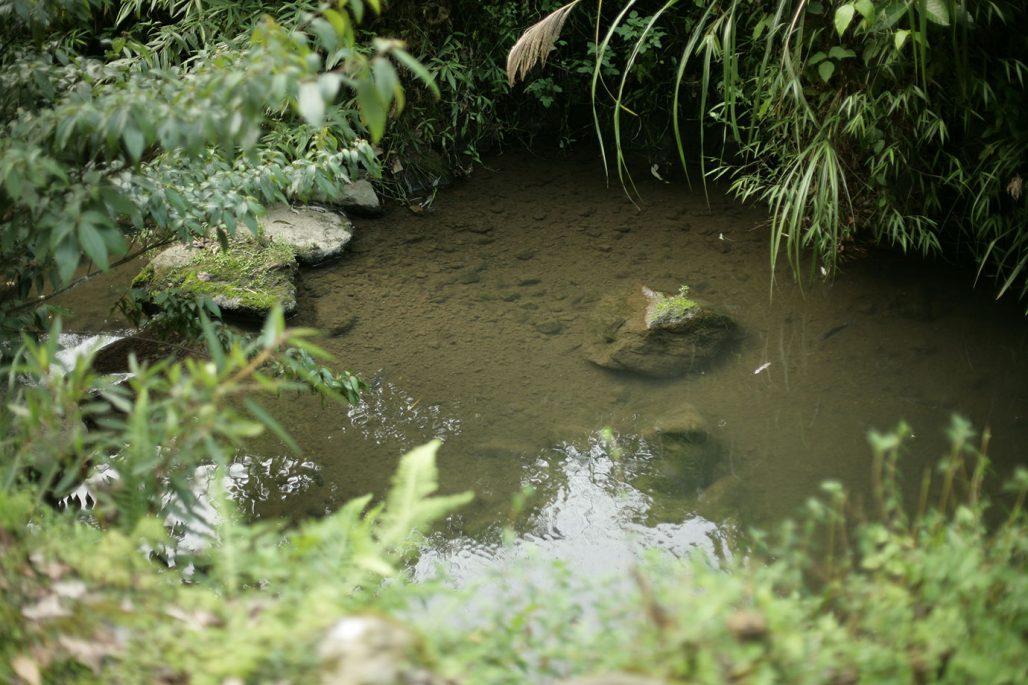 Växter som passar att plantera vid en damm