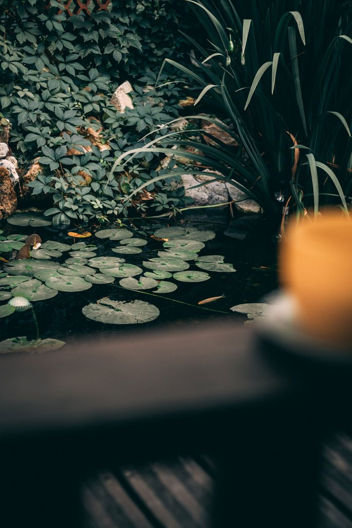 Växter som passar vid vatten